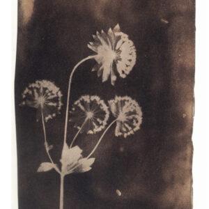 1834 Talbot invente le négatif